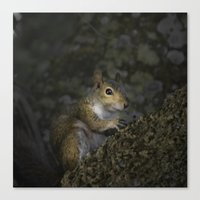 squirrel Canvas Prints featuring Squirrel by Judith Lee Folde Photography & Art