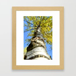 Running up the tree  Framed Art Print