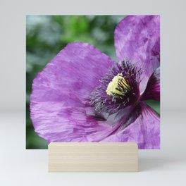 Purple Poppy / Violet Mini Art Print