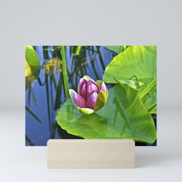 Summery Ode to the WATER LILY Mini Art Print