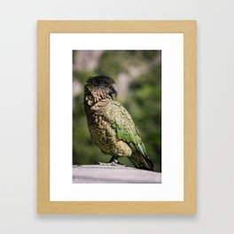 Kea Bird Framed Art Print