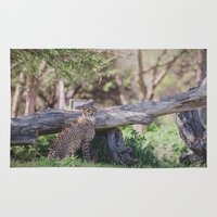 cheetah Area & Throw Rugs featuring Cheetah by Retro Love Photography