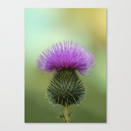 Bright Purple and Green Thistle Canvas Print
