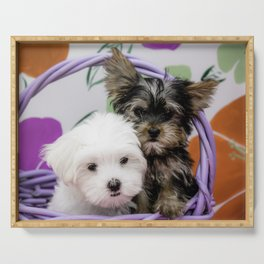 Maltese Puppy and a Yorkshire Terrier Puppy Cuddling in a Purple Basket with Flower Background Serving Tray