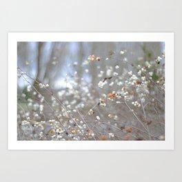 White berries in the winter Art Print
