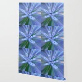 Agapanthus flower in the garden Wallpaper