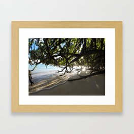 Amongst The Mangroves Framed Art Print