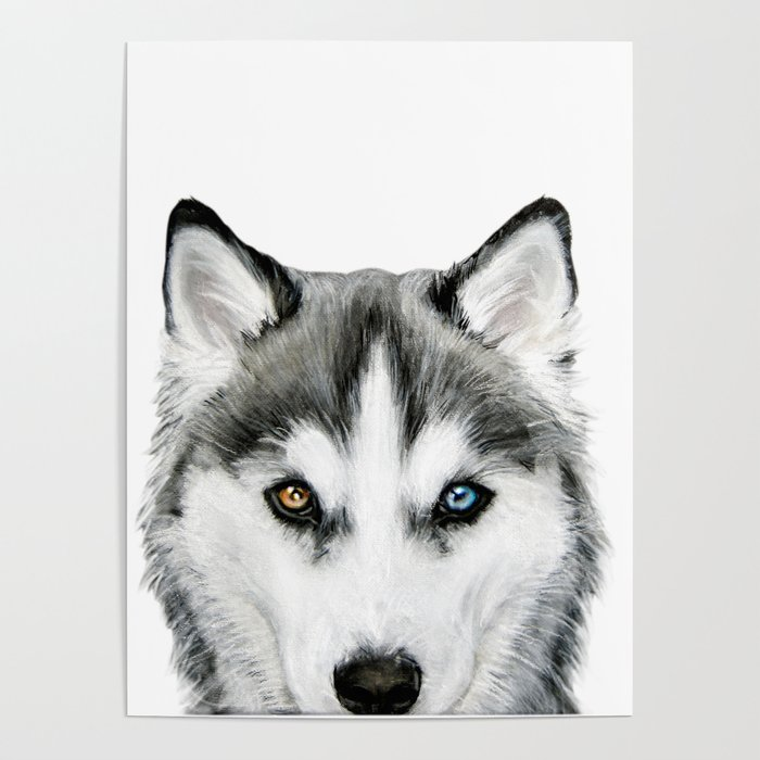Siberian Husky dog with two eye color Dog illustration original painting print Poster