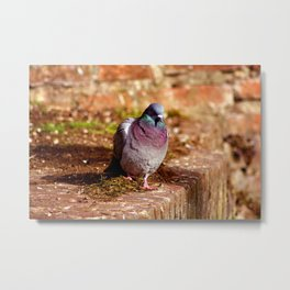 Concept nature : Ready to start Metal Print