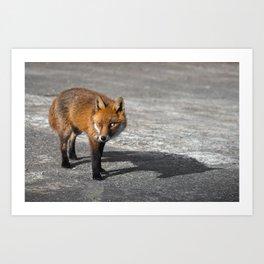 Milky-Eyed Fox Art Print