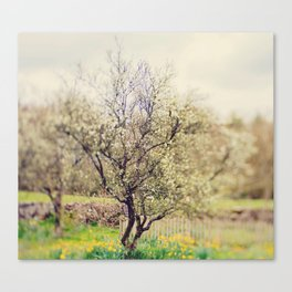 Lensbaby Spring  Canvas Print