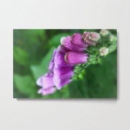 bellflowers Metal Print