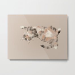 Playful fluffy cat Metal Print