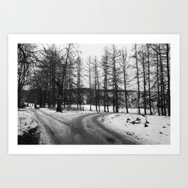 Forest Crotch (B&W film) Art Print