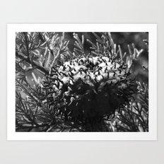 strange fungus 2017 IV Art Print