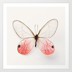 Pink Glasswing Art Print