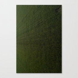Rural Corn Fields Canvas Print