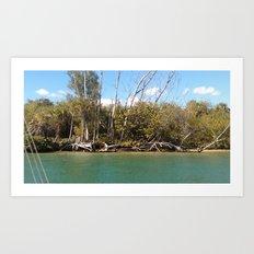 water woods Art Print