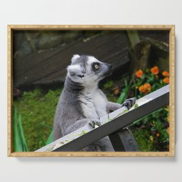 Ring Tailed Lemur Serving Tray