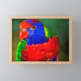 Loris ( Honigpapagei ) Framed Mini Art Print