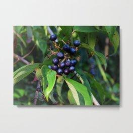 Evening Berries Metal Print
