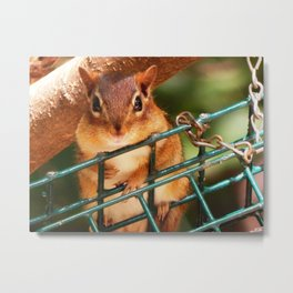 Is this seed for me? Metal Print