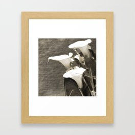 Calla Lily Flower Sepia Photo Framed Art Print