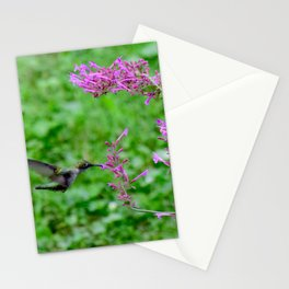Feeding hummingbird 48 Stationery Cards