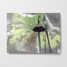 Water Plant Edit Metal Print