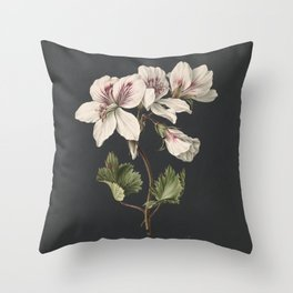 M. de Gijselaar - Pelargonium album bicolor (1830) Throw Pillow