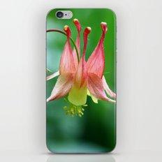 Wild Columbine iPhone & iPod Skin