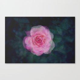 Rose Study 1 Canvas Print