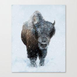 Snowy Bison Canvas Print