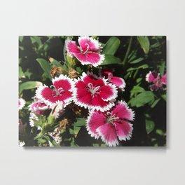 Dianthus Bouquet  Metal Print