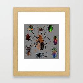 NATURE LOVERS BEETLE BUG COLLECTION ART Framed Art Print