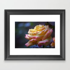 Beautiful Rose 1424 Framed Art Print