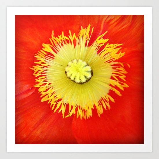 Inside the Poppy Art Print
