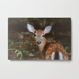 Forest Deer XXVII Metal Print