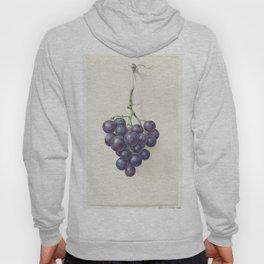 Bunch of blue grapes, Jean Bernard, 1775 - 1833 Hoody