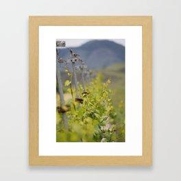 Edna Valley Chardonnay Framed Art Print