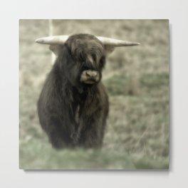 Highland Cattle III Metal Print