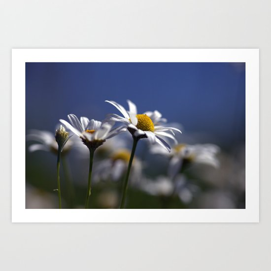 Daisies 3610 Art Print