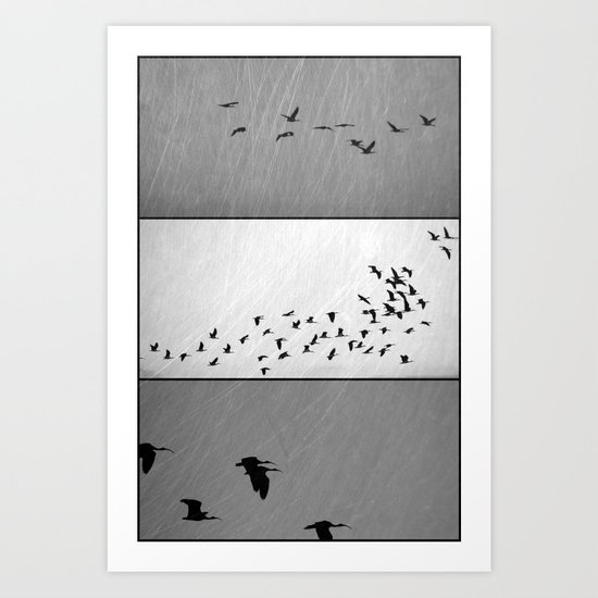 Ibis - Triptych Art Print