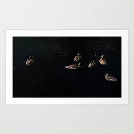 Ducks floating in the night sky. Art Print