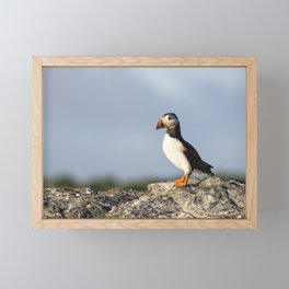 Puffin On The Farne Islands Framed Mini Art Print