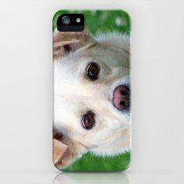 Blond dog portrait iPhone Case