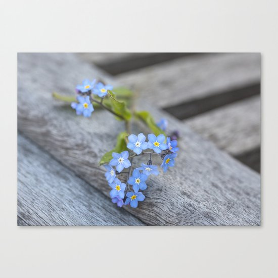 blue flower Fortget Me Not Canvas Print