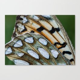 Fritillary Wings Canvas Print