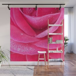 Dew on pink rose petals macro Wall Mural