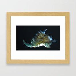 Giant Murex in Moonlight Framed Art Print